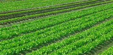 categoria-agricola